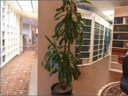 1 Large Office In Beautiful Century City Shared Legal Office Space